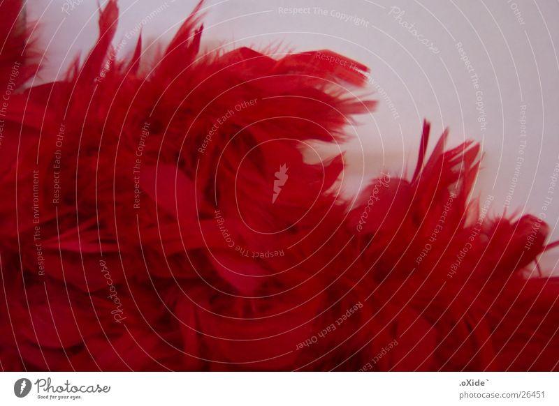 Federn rot hell weich zart Dinge