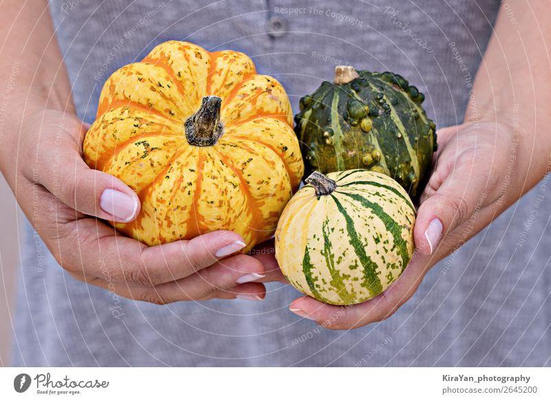 Frohes Thanksgiving Grußkartenkonzept Gemüse Lifestyle Glück Dekoration & Verzierung Erntedankfest Halloween Frau Erwachsene Hand Natur Herbst klein gelb Kürbis