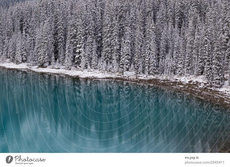 Gepudert Ferien & Urlaub & Reisen Ausflug Expedition Winter Schnee Winterurlaub Natur Landschaft Wald Seeufer Moraine Lake außergewöhnlich türkis kalt Klima