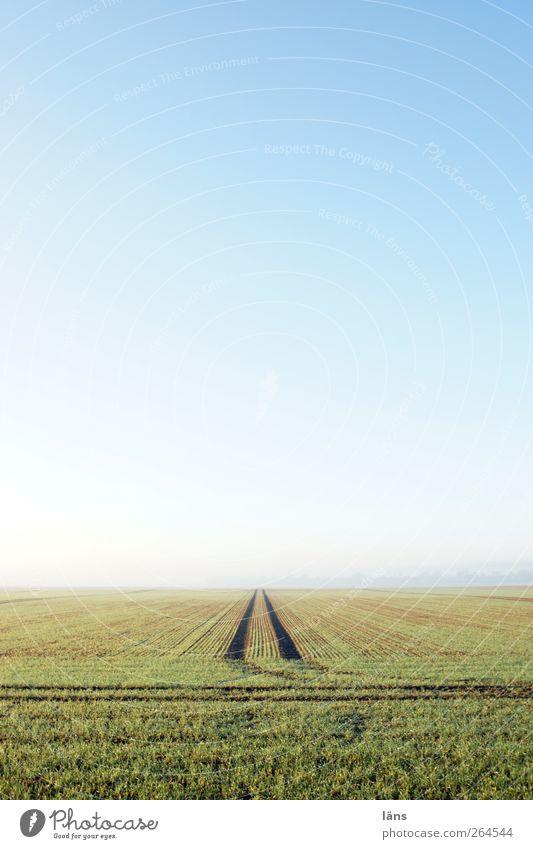 gerade aus Himmel blau grün Ferne Umwelt Landschaft Wege & Pfade Frühling Erde Feld Spuren Schönes Wetter Unendlichkeit Wolkenloser Himmel