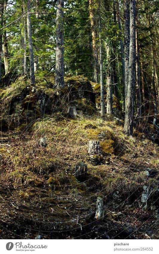 Gehölz Natur Baum Wald Gras natürlich Moos Baumstumpf