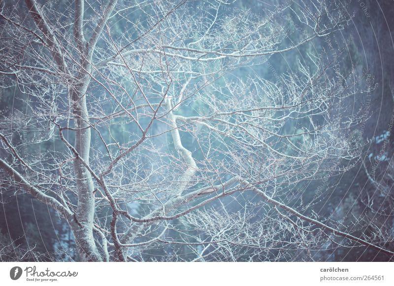 poem Natur blau ruhig Wald kalt grau elegant ästhetisch einfach Baumstamm Zweig Baumkrone Buche