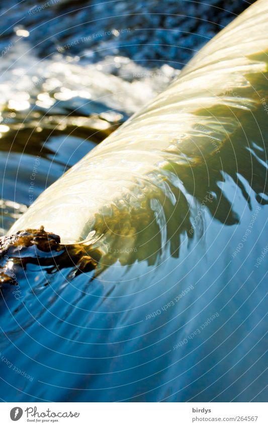 Schatz Natur Wasser Bach Wasserfall leuchten ästhetisch authentisch elegant Flüssigkeit nass natürlich positiv beweglich Leben Beginn Bewegung Energie
