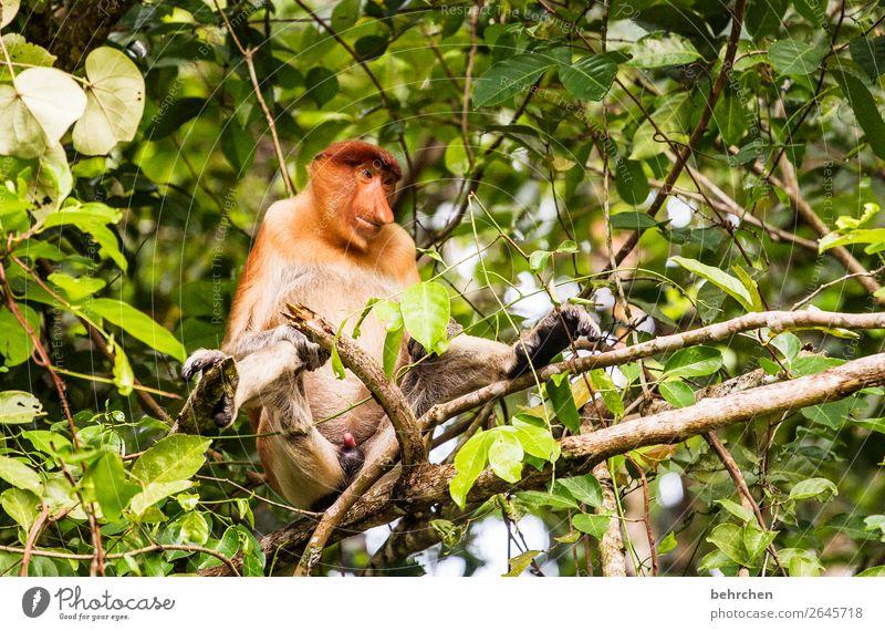 affengeil Ferien & Urlaub & Reisen Natur Pflanze Baum Tier Blatt Ferne lustig Tourismus außergewöhnlich Freiheit Ausflug Wildtier Abenteuer fantastisch Nase