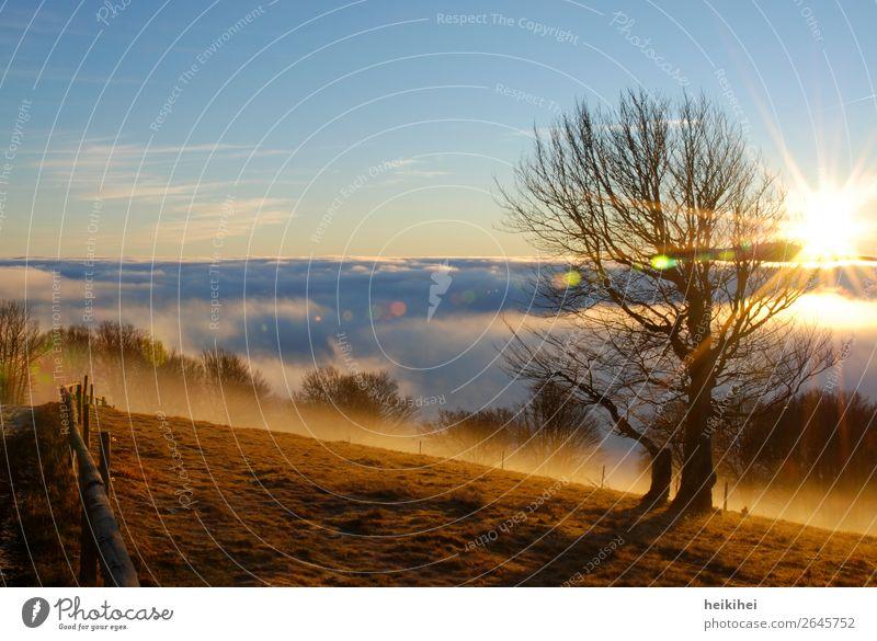 Sonnenaufgang auf dem Feldberg Himmel Natur Ferien & Urlaub & Reisen schön Landschaft Baum Wolken Ferne Berge u. Gebirge Herbst natürlich Tourismus Freiheit