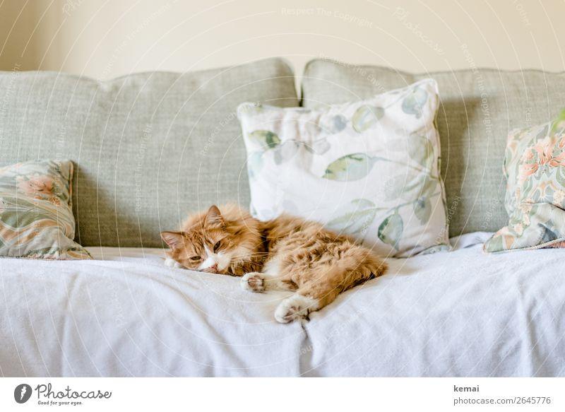 Ginger Katze schön Erholung Tier ruhig Lifestyle Glück Stil Häusliches Leben Wohnung Zufriedenheit Freizeit & Hobby liegen authentisch Wohlgefühl harmonisch