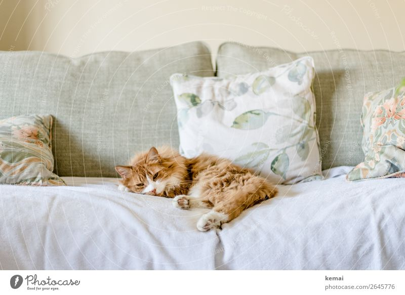 Ginger Lifestyle Stil harmonisch Wohlgefühl Zufriedenheit Sinnesorgane Erholung ruhig Freizeit & Hobby Häusliches Leben Wohnung Wohnzimmer Kissen Tier Haustier