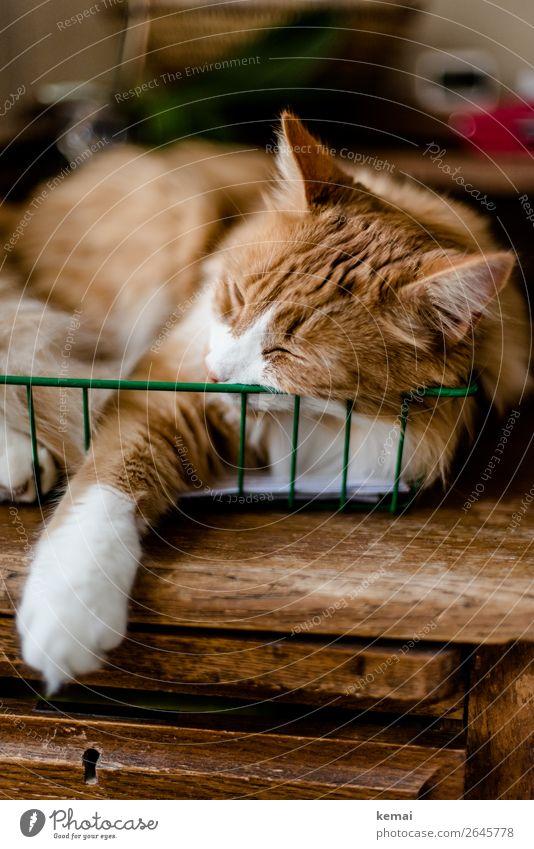 Katze im Korb Erholung Tier ruhig Lifestyle außergewöhnlich orange Büro Häusliches Leben Wohnung Zufriedenheit Freizeit & Hobby liegen authentisch niedlich