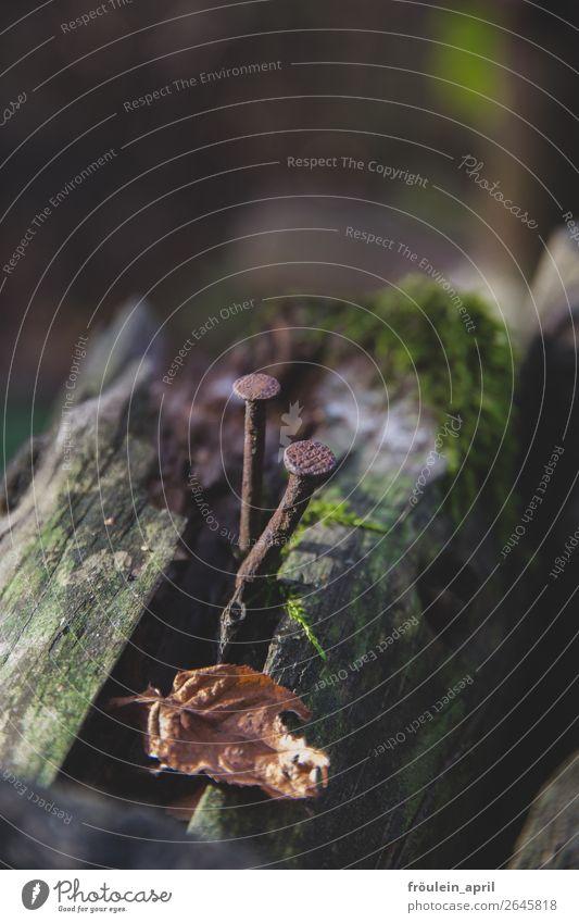 Genagelt Natur Moos Holz Rost alt dunkel Hochformat Nagel Ast Farbfoto Außenaufnahme Textfreiraum oben Tag Schwache Tiefenschärfe