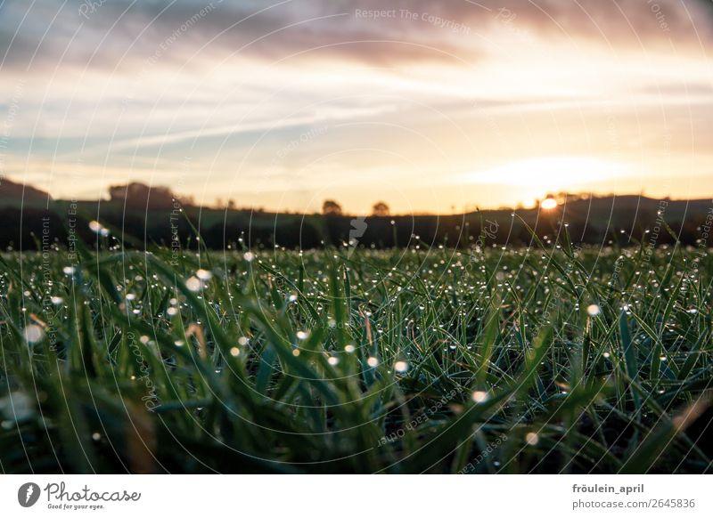 Glitzer ruhig Natur Landschaft Herbst Schönes Wetter Gras Wiese Feld frisch glänzend nass grün Zufriedenheit Vorfreude achtsam einzigartig erleben nachhaltig
