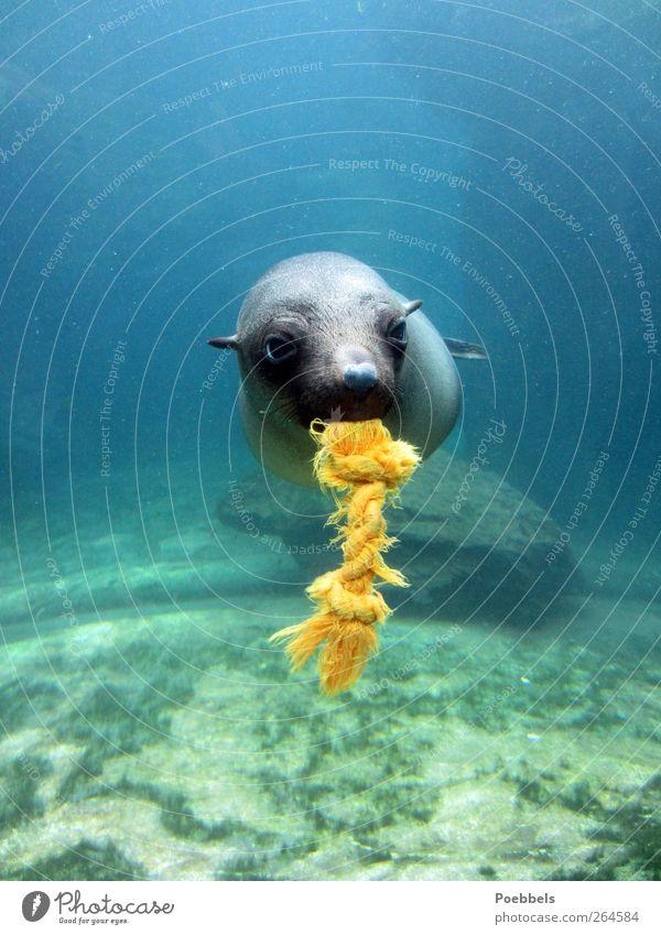 Lass uns spielen Natur blau Wasser grün Meer Freude Tier Umwelt Glück lustig natürlich nass außergewöhnlich Fröhlichkeit Fisch niedlich