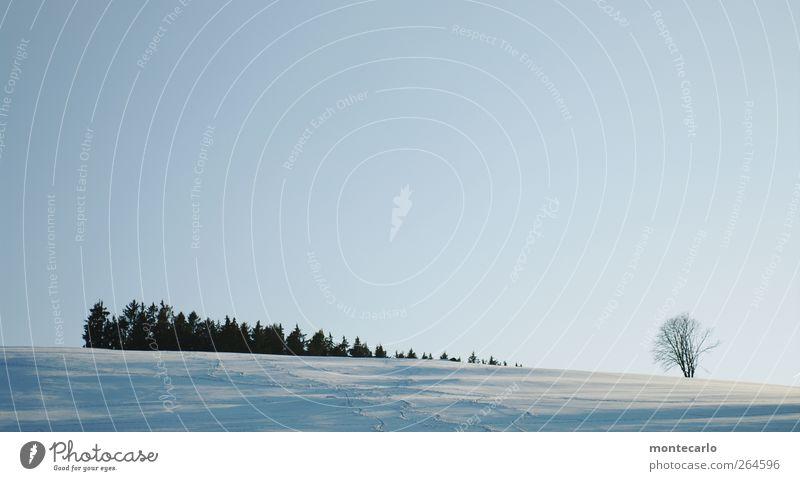 Weit und doch so nah... Winter Schnee Winterurlaub Skipiste Himmel Wolkenloser Himmel Horizont Sonne Sonnenlicht Schönes Wetter Pflanze Baum Wiese Feld Wald