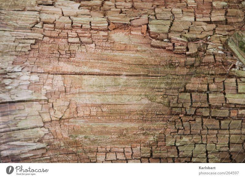 Die emsige Biene hat keine Zeit für Sorgen. Natur alt Hintergrundbild Holz Linie braun Freundschaft Design Idylle Vergänglichkeit Streifen Wandel & Veränderung