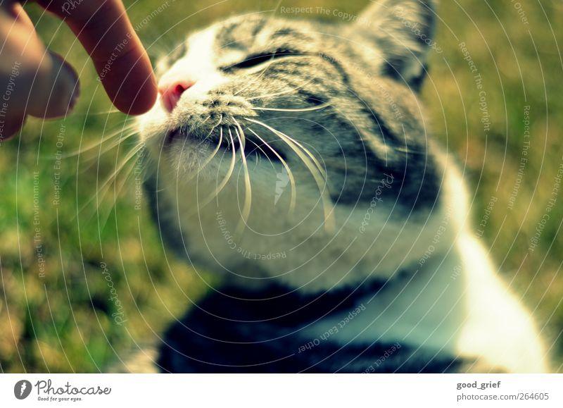 keep in touch Katze Natur Hand Pflanze Tier Liebe Umwelt Landschaft Wiese Gefühle Stimmung Finger Romantik Warmherzigkeit Fell berühren