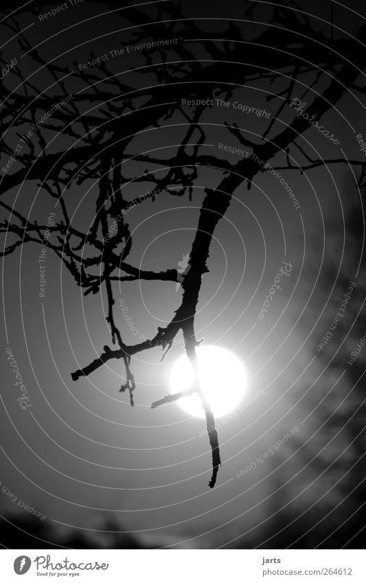 o Himmel Natur Baum Pflanze Sonne ruhig Umwelt hell Angst natürlich Abenteuer gruselig Mond Vollmond