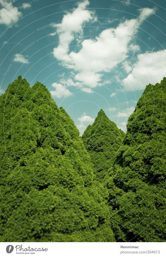 Im Rat der Bäume. Natur Himmel Wolken Sommer Klima Wetter Schönes Wetter Baum Sträucher Park Wachstum blau grün Frühlingsgefühle Symmetrie Spitze Baumkrone Ecke