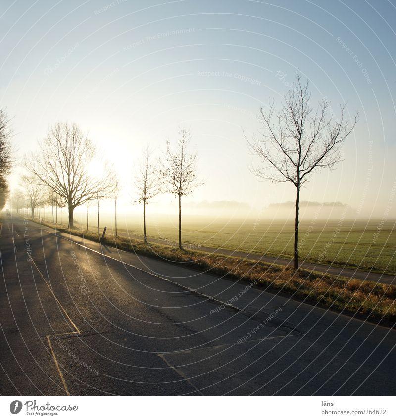 flucht . Umwelt Natur Landschaft Himmel Wolkenloser Himmel Frühling Schönes Wetter Baum Feld Beginn Horizont Ferien & Urlaub & Reisen Straße Straßenbelag