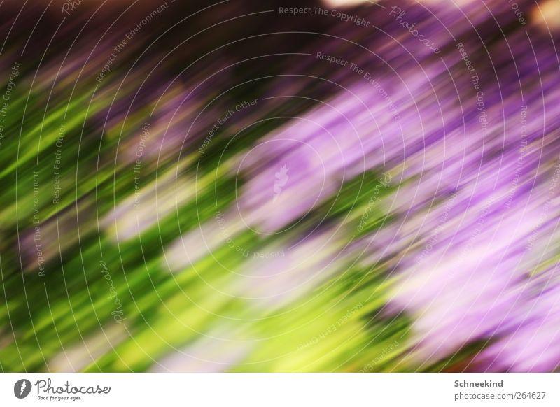 Lauf in den Frühling Natur grün Pflanze Blume Tier Umwelt Landschaft Wiese Gras Frühling träumen Kunst laufen weich verfaulen Idylle