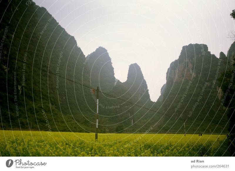 Rapsland Natur Landschaft Berge u. Gebirge Felsen Nebel Hügel Rapsfeld