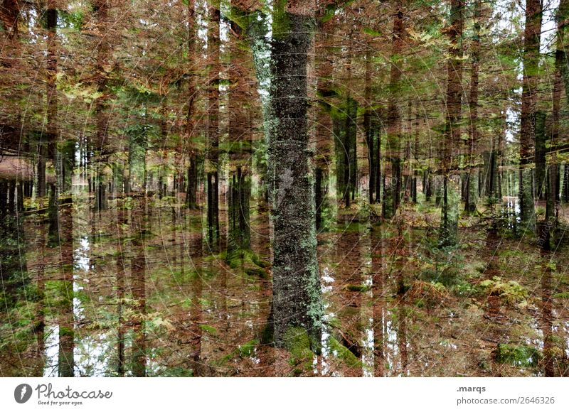 Waldwerk Ausflug Natur Landschaft Sommer Herbst Pflanze Baum Baumstamm außergewöhnlich Coolness trendy modern Stimmung ästhetisch Kreativität Perspektive
