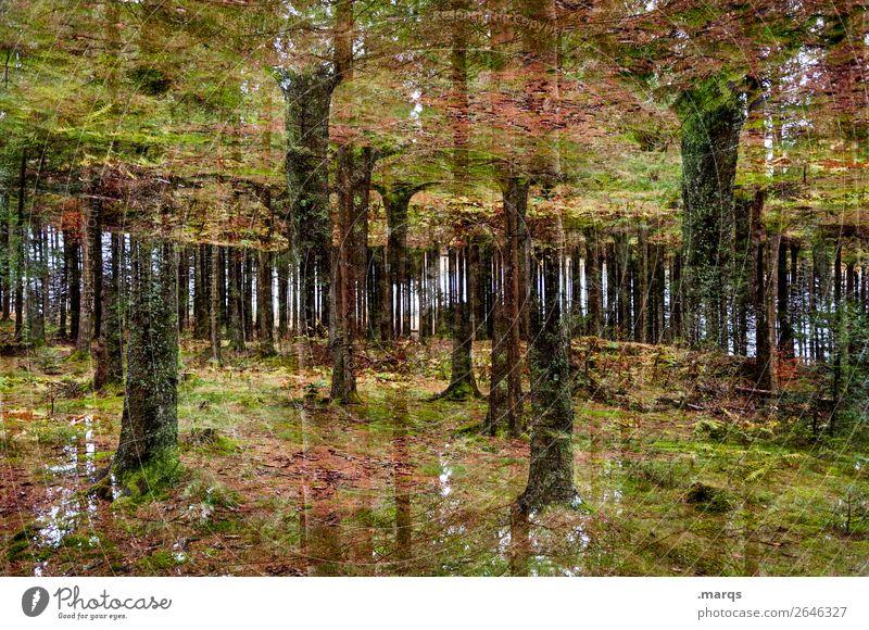 2600 | Schwarzwald Ausflug Abenteuer Natur Pflanze Sommer Herbst Baum Wald Waldboden Baumstamm außergewöhnlich dunkel Stimmung Perspektive Surrealismus