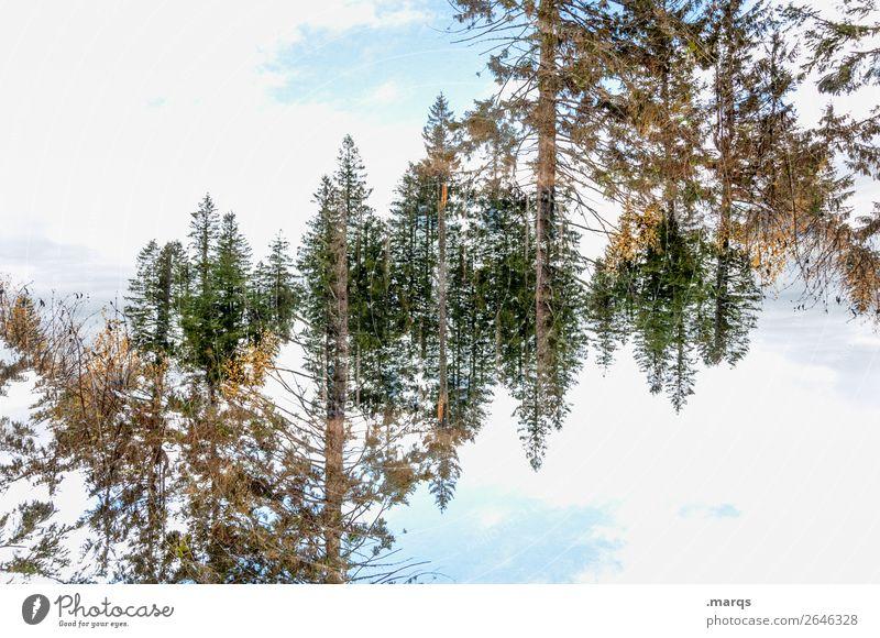 Baumkronen Stil Umwelt Natur Landschaft Himmel Wolken Schönes Wetter Wald außergewöhnlich verrückt Surrealismus Symmetrie Irritation Doppelbelichtung Farbfoto