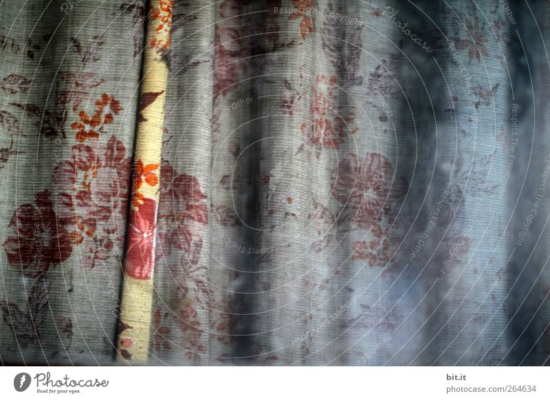 Scheibengardinenstreifen alt Blume Einsamkeit Fenster dunkel Blüte Traurigkeit Innenarchitektur Wohnung Häusliches Leben Dekoration & Verzierung trist Stoff