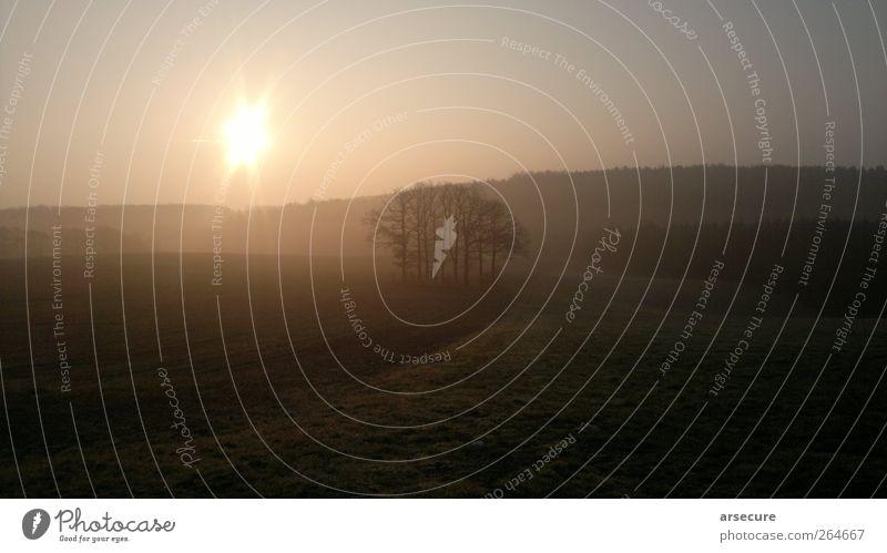Am Morgen ist es noch still schön Baum Pflanze ruhig Erholung Umwelt Landschaft Frühling träumen Horizont Feld Hügel Schönes Wetter Gelassenheit