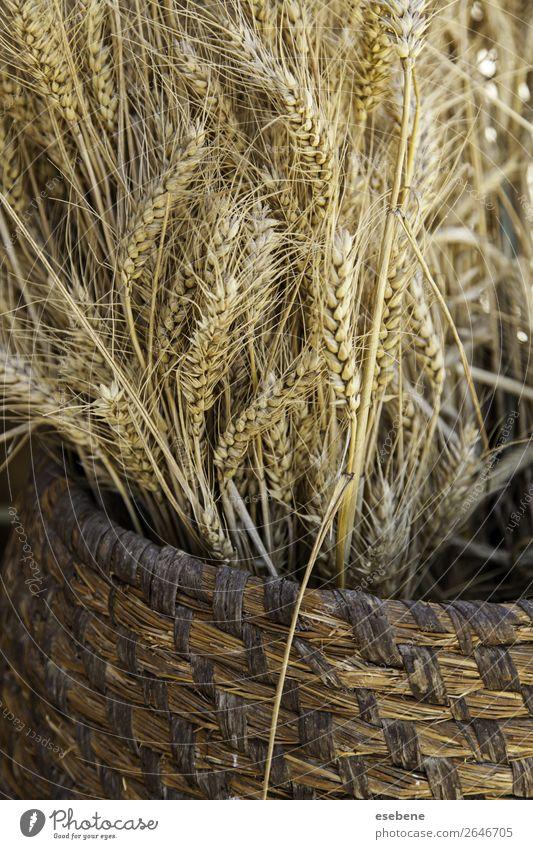 Weidenkorb mit trockenem Weizen Brot Sommer Ostern Umwelt Natur Landschaft Pflanze Holz Wachstum frisch natürlich gelb gold weiß Korb Hintergrund Ackerbau Korn