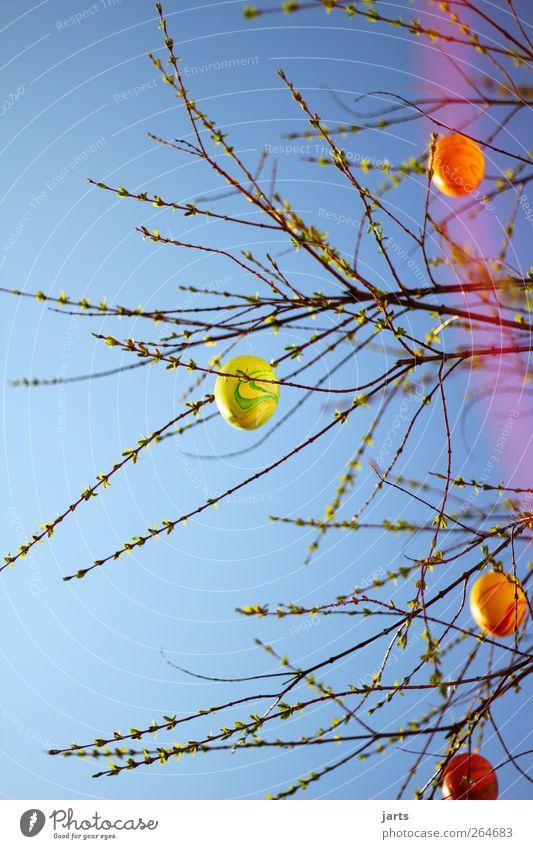 eijeijei Ostern Himmel Frühling Baum Blatt Zufriedenheit Frühlingsgefühle Vorfreude Ei Osterei Farbfoto mehrfarbig Außenaufnahme Menschenleer Textfreiraum oben
