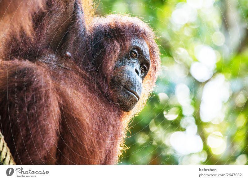 weisheit und erfahrung | alterserscheinungen Ferien & Urlaub & Reisen schön Baum Tier Blatt Ferne Tourismus außergewöhnlich Freiheit Ausflug nachdenklich