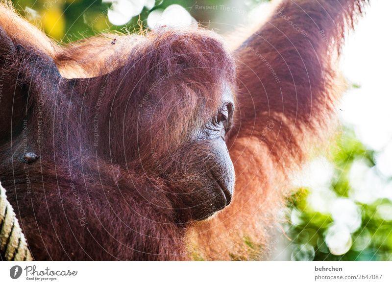 an was schönes denken Mensch Ferien & Urlaub & Reisen Tier Ferne Tourismus außergewöhnlich Freiheit Ausflug nachdenklich Wildtier Abenteuer fantastisch Asien