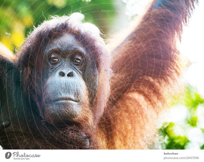 gedankenverloren Ferien & Urlaub & Reisen Natur schön Tier Ferne Tourismus außergewöhnlich Freiheit Ausflug nachdenklich Wildtier Abenteuer fantastisch Asien