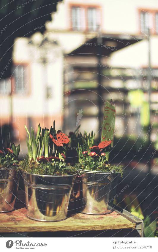 Natur im Töpfchen Pflanze Tisch Schönes Wetter Schmetterling Markt Buden u. Stände Preisschild Topfpflanze