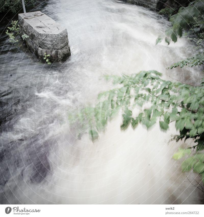 Am Canale Umwelt Natur Pflanze Wasser Klima Wetter Wind Baum Blatt Verkehr Schifffahrt Wasserstraße Kanal Wellen Stein Bewegung gigantisch nass unten wild