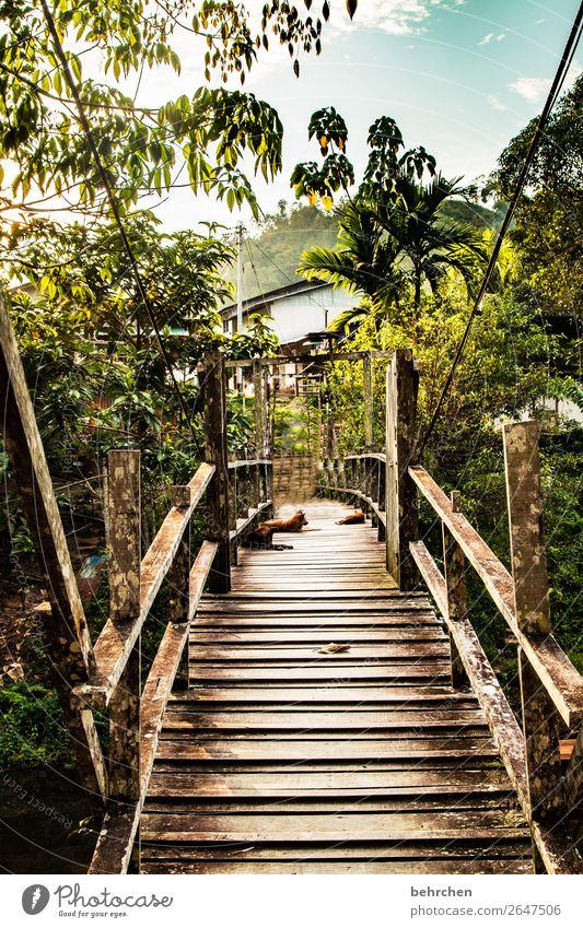 lieblingsort | FERNWEH Himmel Ferien & Urlaub & Reisen Natur Hund schön Landschaft Ferne Tourismus außergewöhnlich Freiheit Ausflug Abenteuer fantastisch Brücke