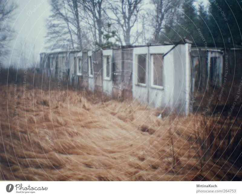 voyage voyage. Umwelt Natur Landschaft Pflanze Himmel Winter Baum Gras Sträucher Küste Moor Sumpf Traurigkeit Liebeskummer Sehnsucht Heimweh Enttäuschung