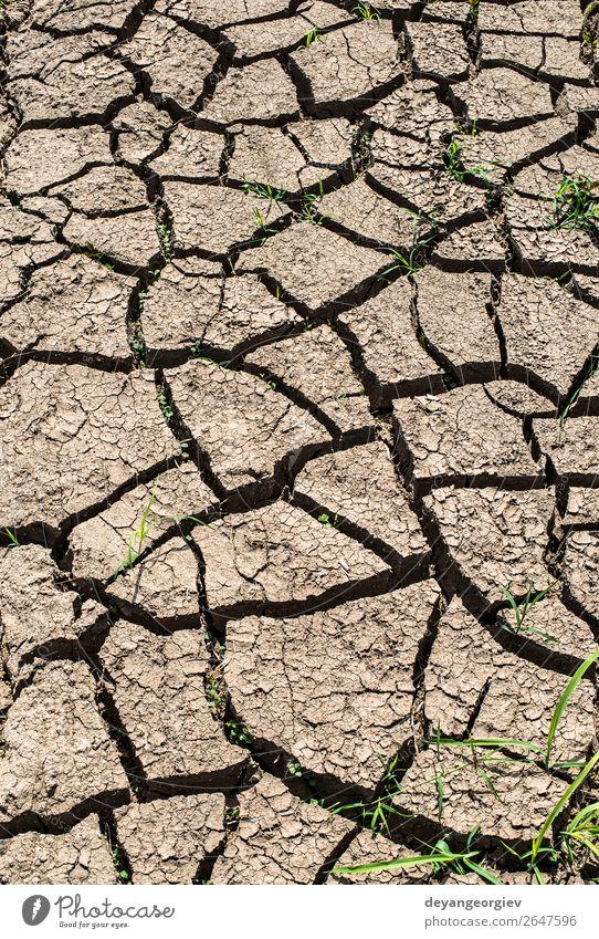 Natur Sommer Umwelt natürlich Tod Erde Armut Klima Boden heiß Riss Oberfläche Konsistenz Desaster Dürre Schlamm