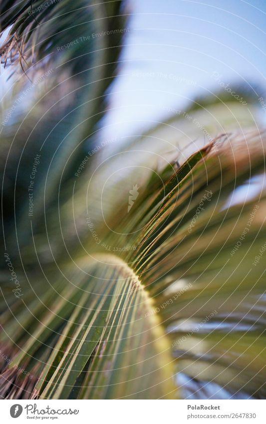 #AS# UrlaubsGrün Umwelt Natur ästhetisch Sommer Sommerurlaub Palme grün Palmenwedel Fuerteventura sommerlich Farbfoto Gedeckte Farben Außenaufnahme