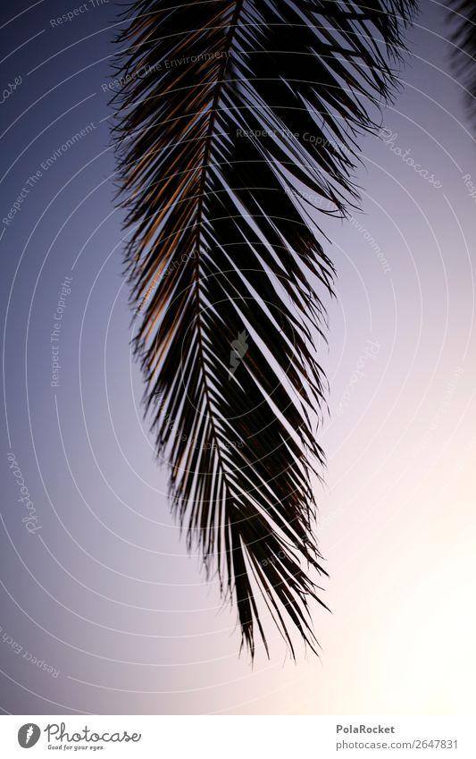 #AS# Schattenwedel Kunst ästhetisch Palme Palmenwedel Palmendach Idylle Ferien & Urlaub & Reisen Urlaubsfoto Urlaubsstimmung Urlaubsort Urlaubsgrüße Paradies