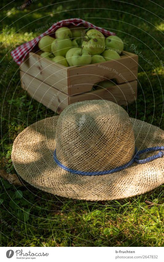 Streuobstwiese, Apfelernte Lebensmittel Frucht Picknick Bioprodukte Vegetarische Ernährung Gesunde Ernährung Gartenarbeit Landwirtschaft Forstwirtschaft Sommer