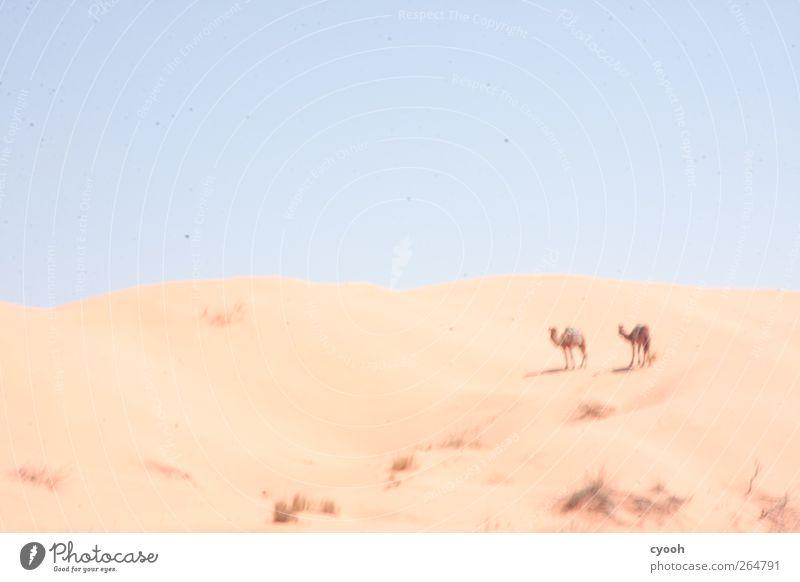 Fatamorgana Landschaft Sand Luft Himmel Wolkenloser Himmel Horizont Sonne Sonnenlicht Sommer Klima Wetter Schönes Wetter Wärme Dürre Sträucher Wüste stehen
