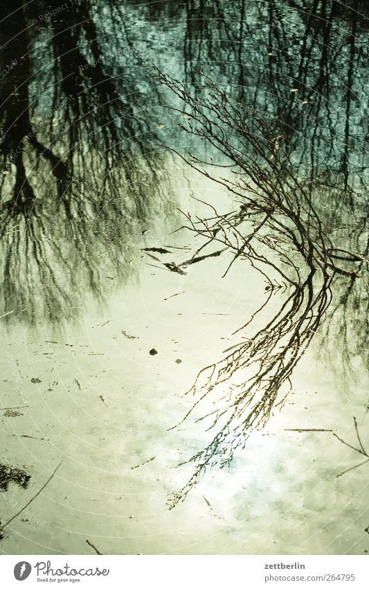 Tümpel Sonne Gartenarbeit Pflanze Klima Klimawandel Wetter Schönes Wetter Blatt Park Küste Seeufer Flussufer Bucht Moor Sumpf springen gut gaarten Hecke