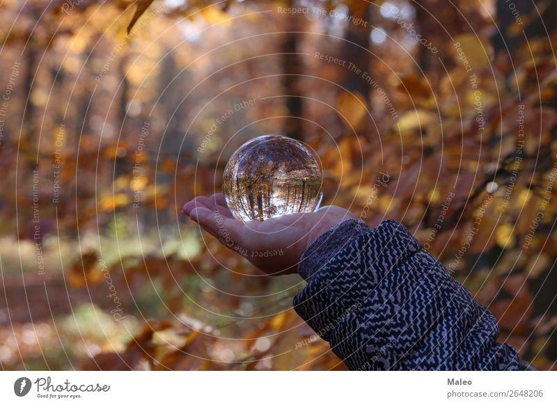 Herbst Wald Landschaft Natur Kugel Hintergrundbild schön Umgebung Glas Glaskugel Blatt Außenaufnahme Baum Herbstlaub Kristalle Tag Hand Pflanze Zweig Sträucher