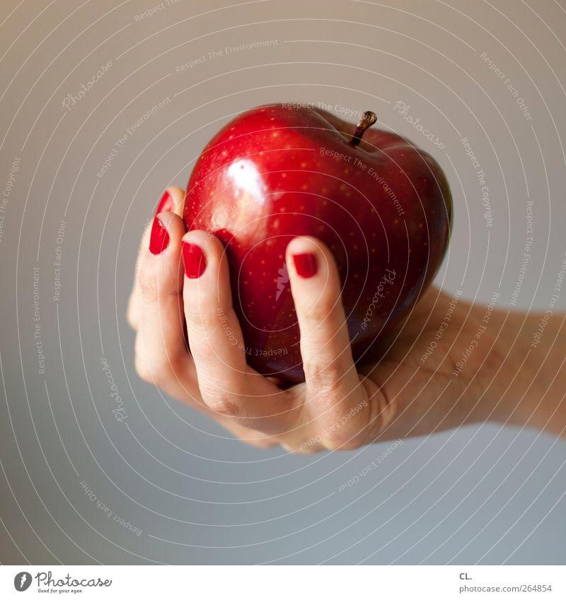 apfel Mensch Frau Jugendliche Hand rot Erwachsene feminin 18-30 Jahre Essen Gesundheit natürlich Lebensmittel Frucht Zufriedenheit frisch Fröhlichkeit