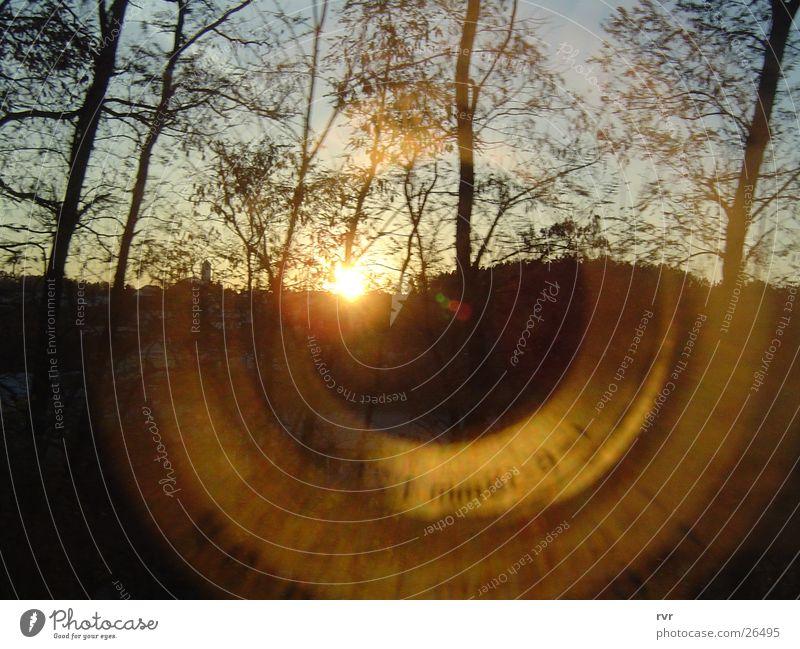 zenitale schattenspiele Natur Sonne Wald
