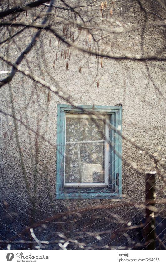 für meine Fenster-Ausstellung alt Wand Mauer Fassade Ast türkis Fensterscheibe Fensterrahmen