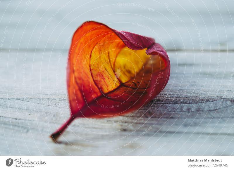 Blatt im Herbst Tisch Umwelt Natur Pflanze Holz alt gelb rot ästhetisch Erholung Farbe Zufriedenheit ruhig Farbfoto Gedeckte Farben Außenaufnahme Detailaufnahme