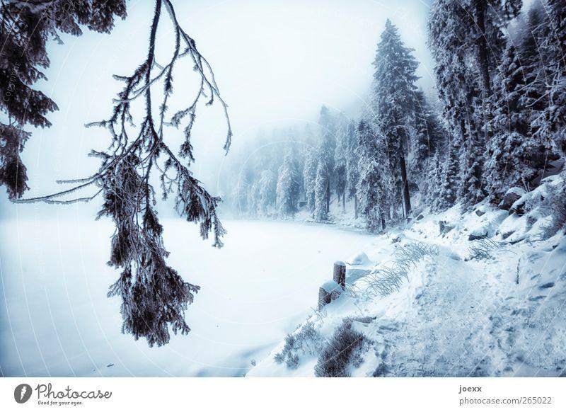Geh! Natur Landschaft Winter schlechtes Wetter Nebel Eis Frost Schnee Wald Seeufer Bach Wege & Pfade dunkel kalt blau schwarz weiß Idylle Mummelsee Karsee