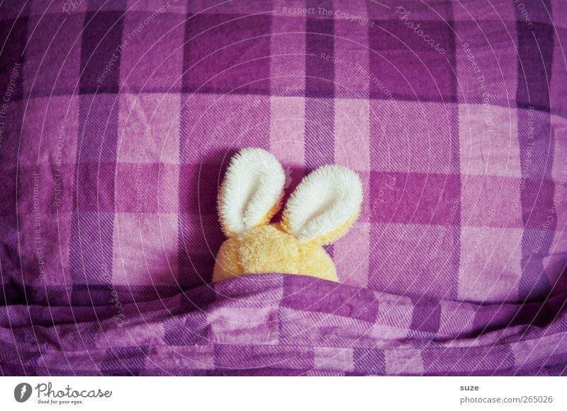 Betthupfer'l gelb klein lustig schlafen Ostern Bett niedlich Ohr Kreativität violett Idee Bettwäsche Hase & Kaninchen kuschlig kariert Humor
